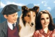 Lassie Come Home (1943) DVD Releases